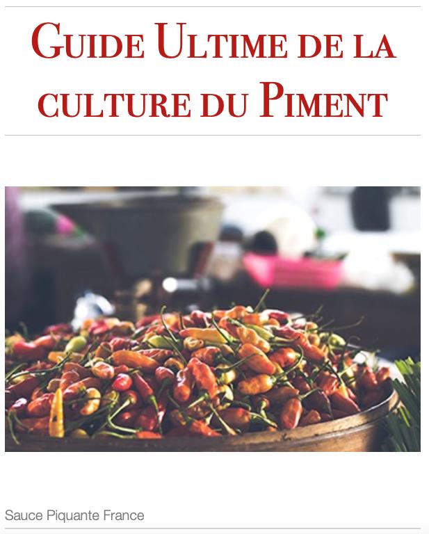 Image Guide de culture comment cultiver son piment?