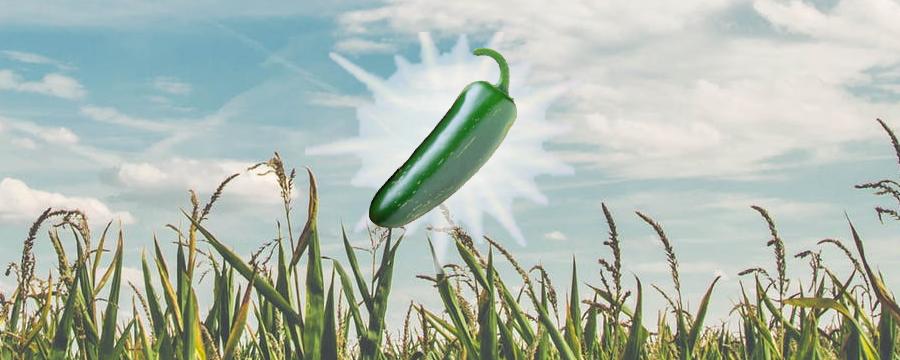 Guide de culture comment cultiver son piment?